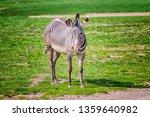 close up photo of chapman's... | Shutterstock . vector #1359640982