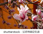 close up view of beautiful pink ... | Shutterstock . vector #1359882518
