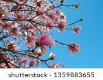close up view of pink magnolia... | Shutterstock . vector #1359883655
