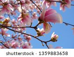 close up view of pink magnolia... | Shutterstock . vector #1359883658