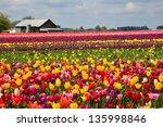 Oregon Tulip Farm