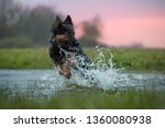 happy dog running directly at... | Shutterstock . vector #1360080938
