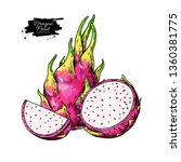 dragon fruit vector drawing.... | Shutterstock .eps vector #1360381775