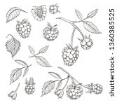 hand drawn raspberry set... | Shutterstock . vector #1360385525