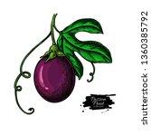 passion fruit branch vector... | Shutterstock .eps vector #1360385792