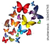 Stock photo many different butterflies isolated on white background 136045745