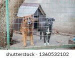 dogs at the animal shelter... | Shutterstock . vector #1360532102