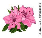 Closeup Of Pink Azalea Flowers...