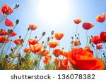 Meadow Of Blooming Red Poppies...