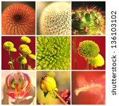 collage with flower and cactus. | Shutterstock . vector #136103102