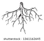 root systems are vital to the... | Shutterstock .eps vector #1361162645