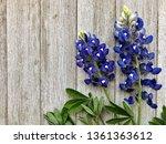 Bluebonnets On A Wooden...