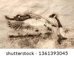 Sketch Of A Canada Goose Takin...