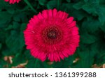 beautiful isolated spring... | Shutterstock . vector #1361399288