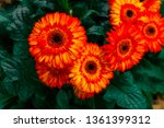 beautiful isolated spring... | Shutterstock . vector #1361399312