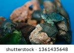 Baby Red Eared Slider Turtles ...