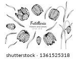 collection set of fritillaria... | Shutterstock .eps vector #1361525318