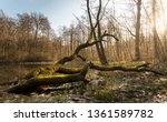 Old Fallen Tree Covered With...