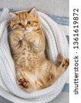 little striped kitten playing... | Shutterstock . vector #1361619872