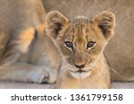 a horizontal image of a tiny... | Shutterstock . vector #1361799158