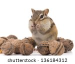 Chipmunk Eating Walnut