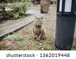 the cat is sitting on the grass | Shutterstock . vector #1362019448
