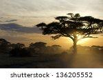 Acacia Tree At Sunset In Kenya...