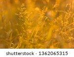 abstract bokeh blurred nature... | Shutterstock . vector #1362065315
