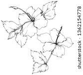 vector hibiscus floral... | Shutterstock .eps vector #1362154778