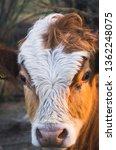 full frame portrait of...   Shutterstock . vector #1362248075