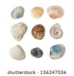 Collection Of Seashells...