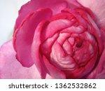 pink rose bouquet | Shutterstock . vector #1362532862