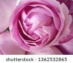 pink rose bouquet | Shutterstock . vector #1362532865