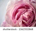 pink rose bouquet | Shutterstock . vector #1362532868