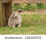 A Cute Rabbit With Floppy Ears...