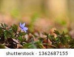 spring flower. beautiful...   Shutterstock . vector #1362687155