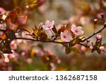 spring flowers. beautifully...   Shutterstock . vector #1362687158