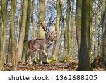 beautiful animal in a wild...   Shutterstock . vector #1362688205