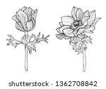 flower set anemones graphic... | Shutterstock . vector #1362708842