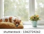 cute dog is sleeping on the...   Shutterstock . vector #1362724262