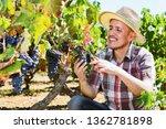 happy glad diligent mature male ... | Shutterstock . vector #1362781898