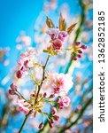looking up at flowering... | Shutterstock . vector #1362852185