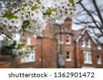 blooming springtime blossom... | Shutterstock . vector #1362901472