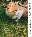 green eyes cat and strong man...   Shutterstock . vector #1363138055