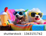 Stock photo happy puppys with sunglasses in the beach 1363151762