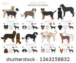 Stock vector shepherd and herding dogs collection isolated on white flat style different color and country of 1363258832
