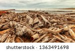 Driftwood Washed Up On A...