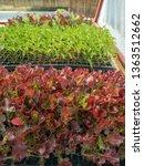 fresh organic vegetable... | Shutterstock . vector #1363512662