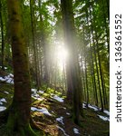 sunshine in the forest | Shutterstock . vector #136361552