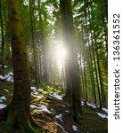 sunshine in the forest | Shutterstock . vector #136361552
